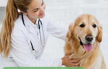 seguro petshop e clinicas veterinarias Corretora de Seguro Belo Horizonte Navarro